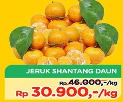 Promo Harga Jeruk Shantang Daun  - TIP TOP